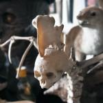 cabinet de curiosités xavier bonnel verdun